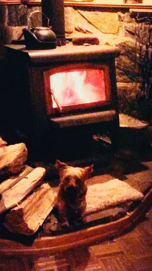 North Carolina United States Woodstove Heat Cozy Fire with Warm Yorkie Dog in Wintertime