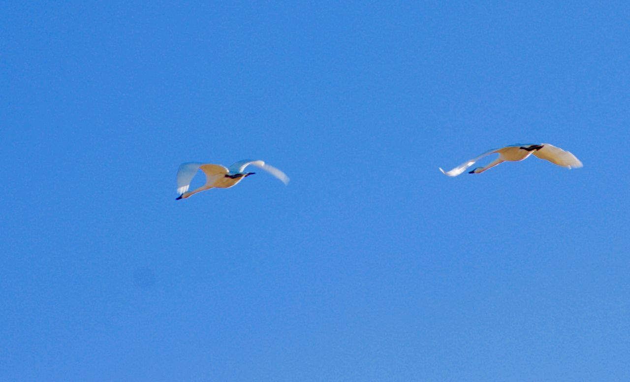 Fly Away Home Bird Flying Blue Sky Spread Wings Canon Photograpy Canon T3i Birds Wildlife Birds Lover Birds_collection Birdwatching
