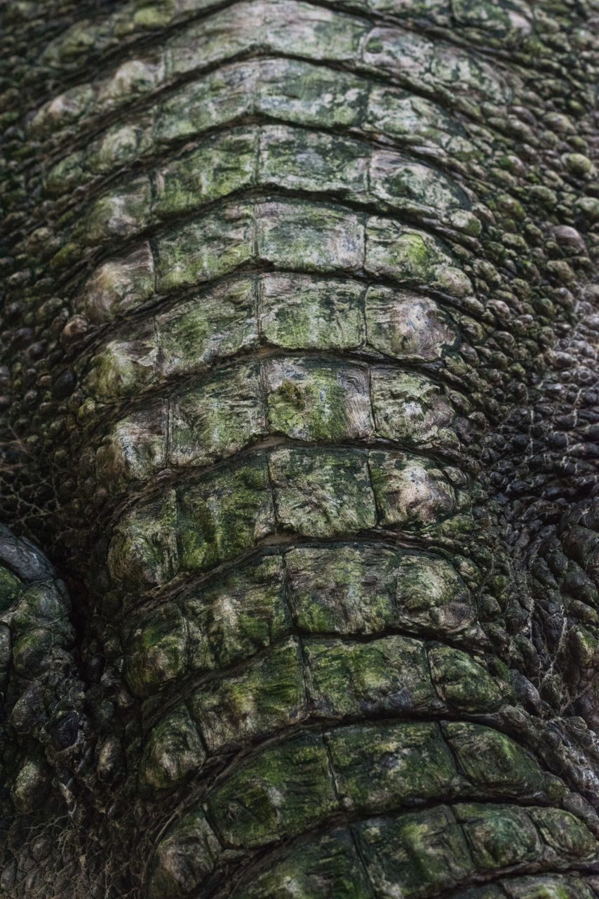 animal skin, outdoors, full frame, animal scale, close-up, animals in the wild, one animal, animal themes, no people, day, reptile, nature