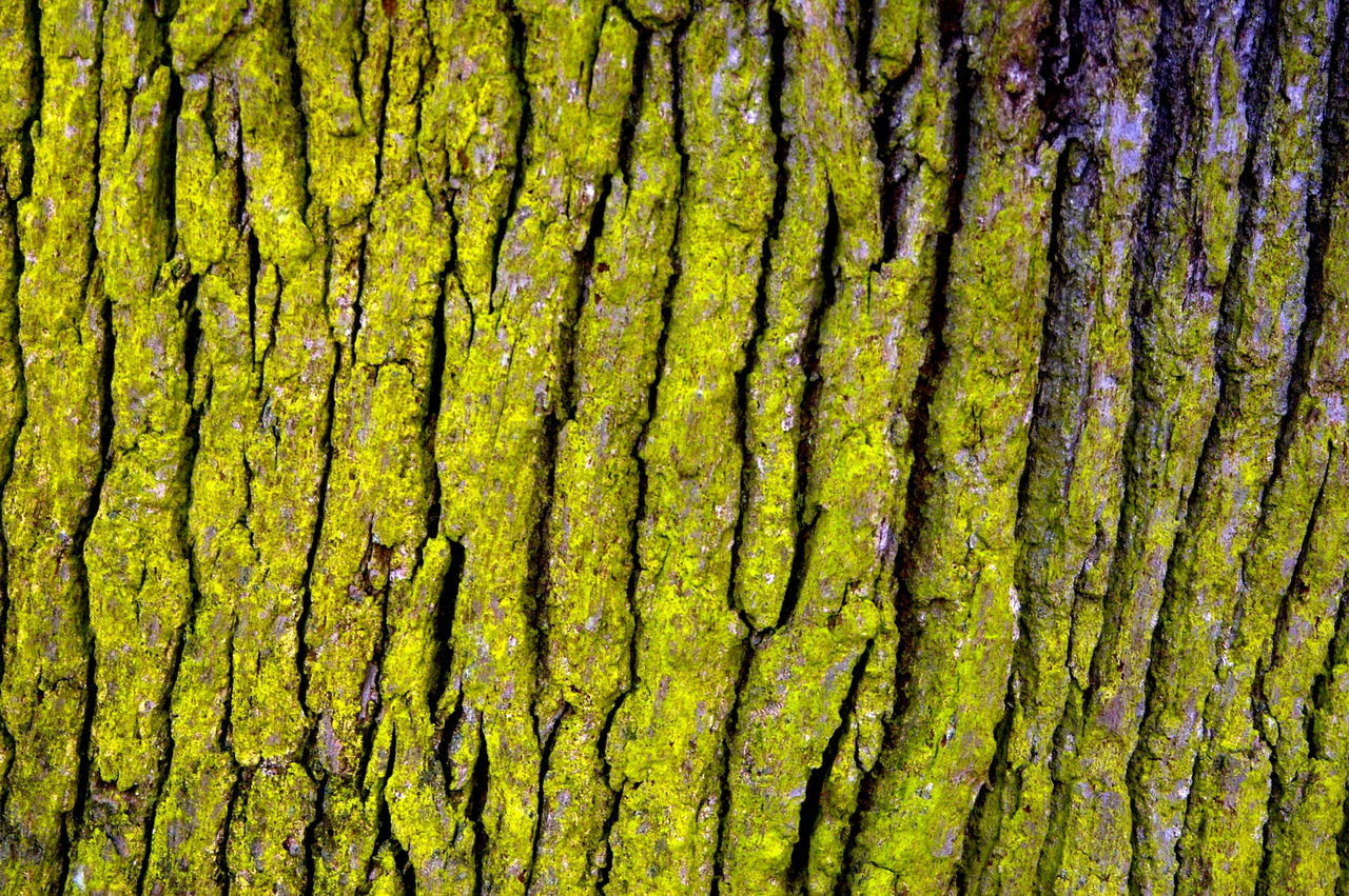 work Jan 2017 Backgrounds Beauty In Nature Close-up Day Freshness Full Frame Green Color Growth Nature No People Outdoors Tree Yellow