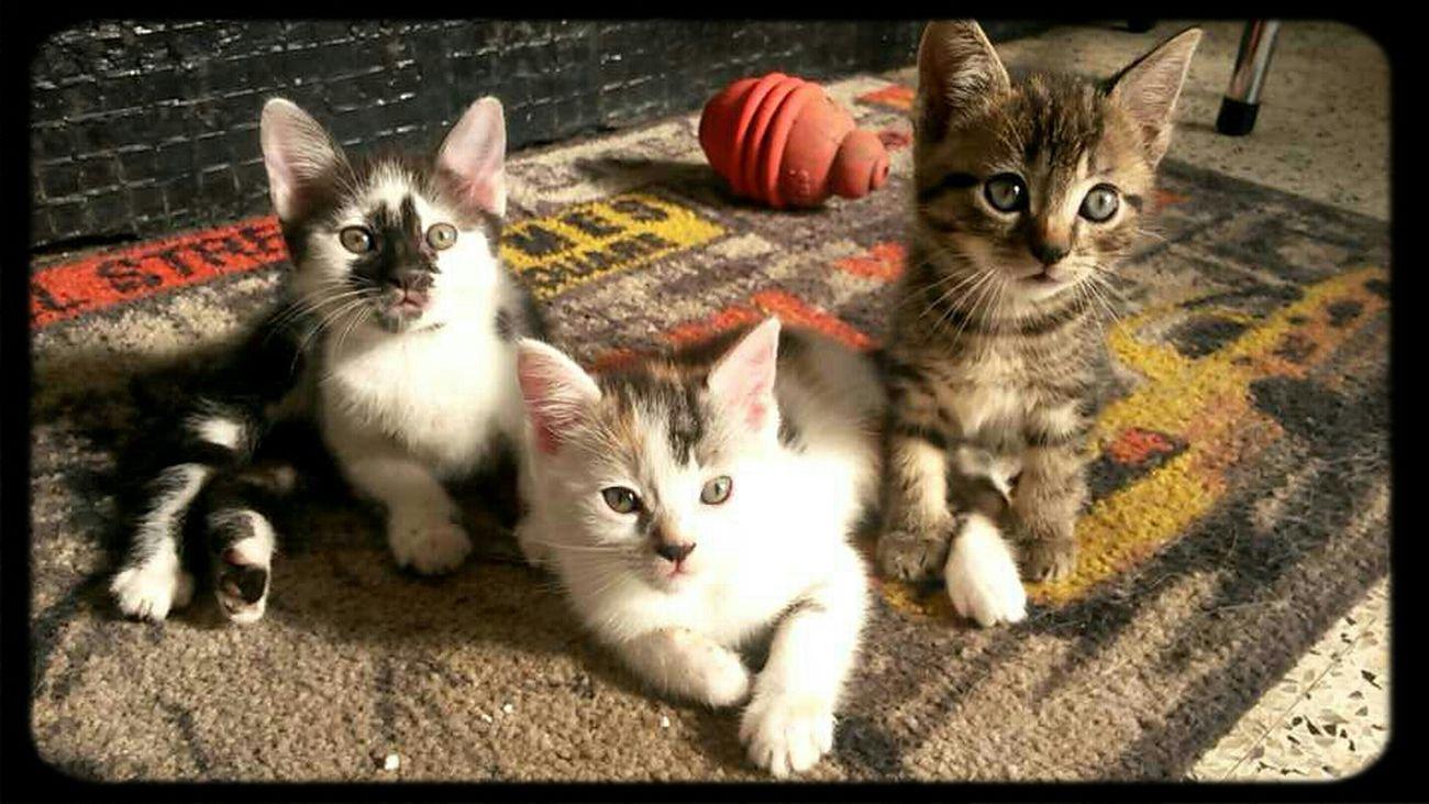 Hi! Cute Cats ♥