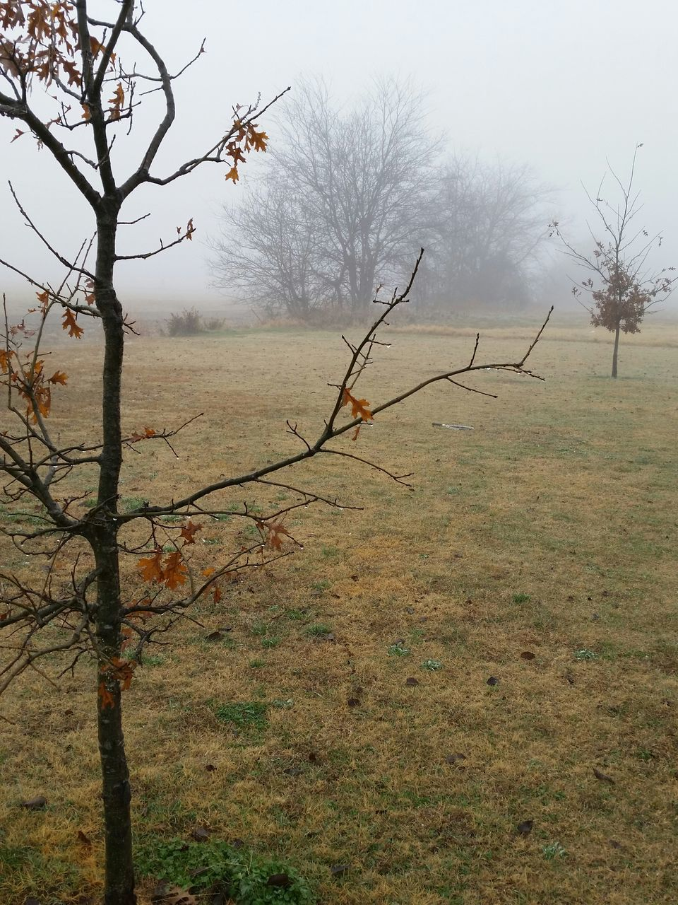 Grassy Landscape In Foggy Weather