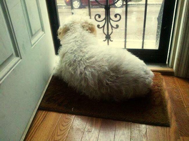 Dog Pets Dog In Doorway