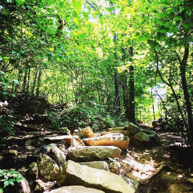 Hiking Hikingadventures Mountain_collection Outdoors Outdoor Photography Outdoor Outside Photography Nature Nature_collection Nature Photography Naturelovers Nature On Your Doorstep Nature's Diversities Hiking Trail Hiking Adventures Hudson River Hudson