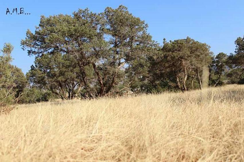 الاشجار Popular Photos Nature الطبيعة
