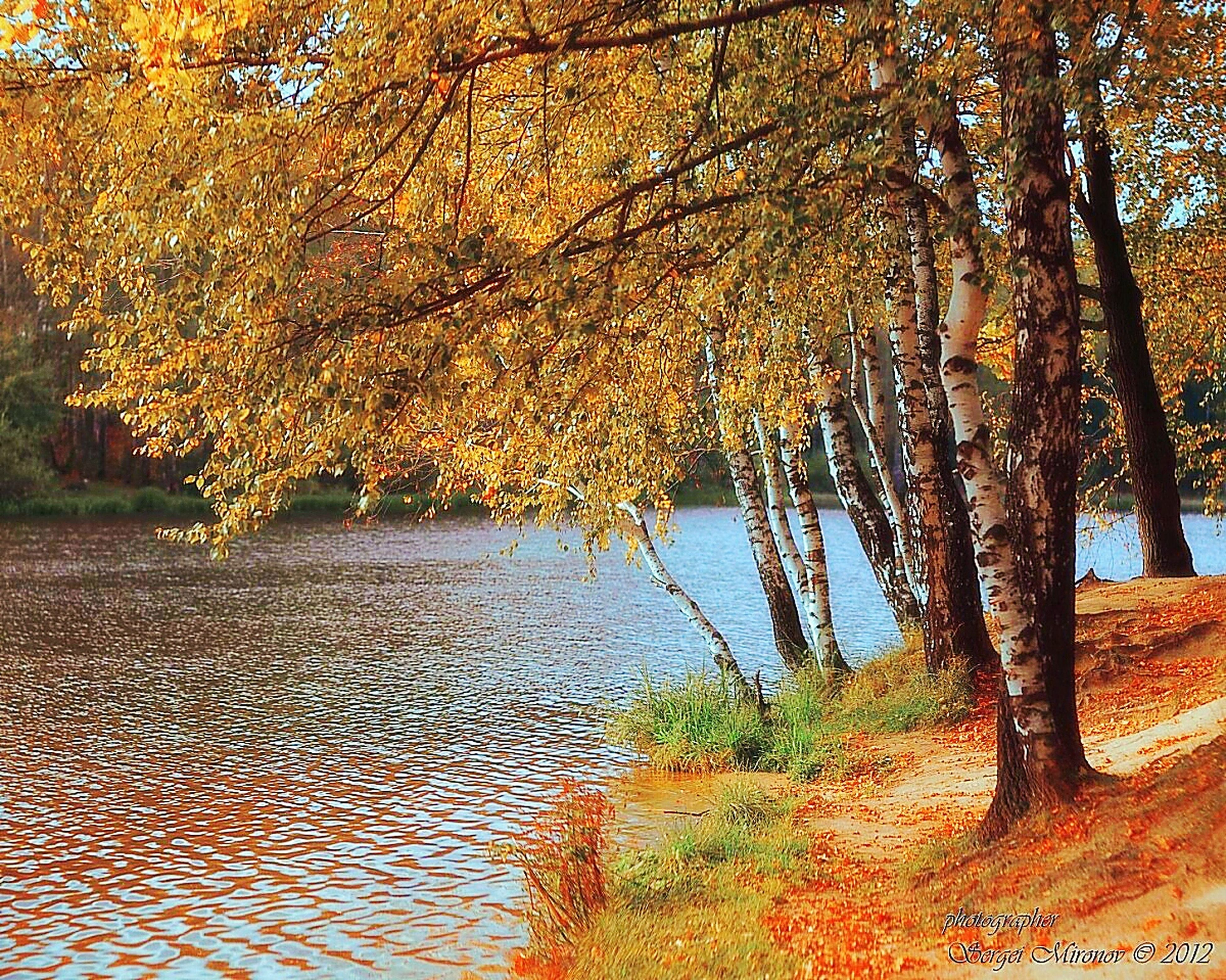 tree, autumn, change, season, branch, water, orange color, nature, tranquility, growth, beauty in nature, tree trunk, tranquil scene, scenics, leaf, yellow, outdoors, no people, day, park - man made space