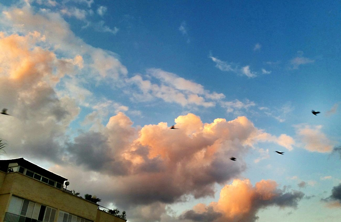 Flying... GM EE 👋🐦🐤🐤 The Beauty In Simplicity Sky And Clouds Flying Birds Sky And City Urban Landscape From Where I Stand The Sound Of Silence What Does Freedom Mean To You? Captured Moment Nature On Your Doorstep