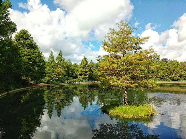 Decorative Island on the Pond. Pond Island Tree Sky Outdoors Tranquility Reflection Lake Beauty In Nature Growth