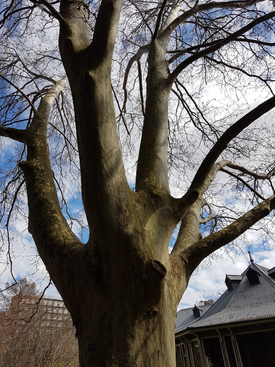 tree, bare tree, tree trunk, branch, low angle view, nature, outdoors, day, no people, architecture, beauty in nature, sky, animal themes, dead tree, mammal