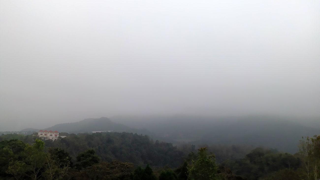 Foggy Day Winter