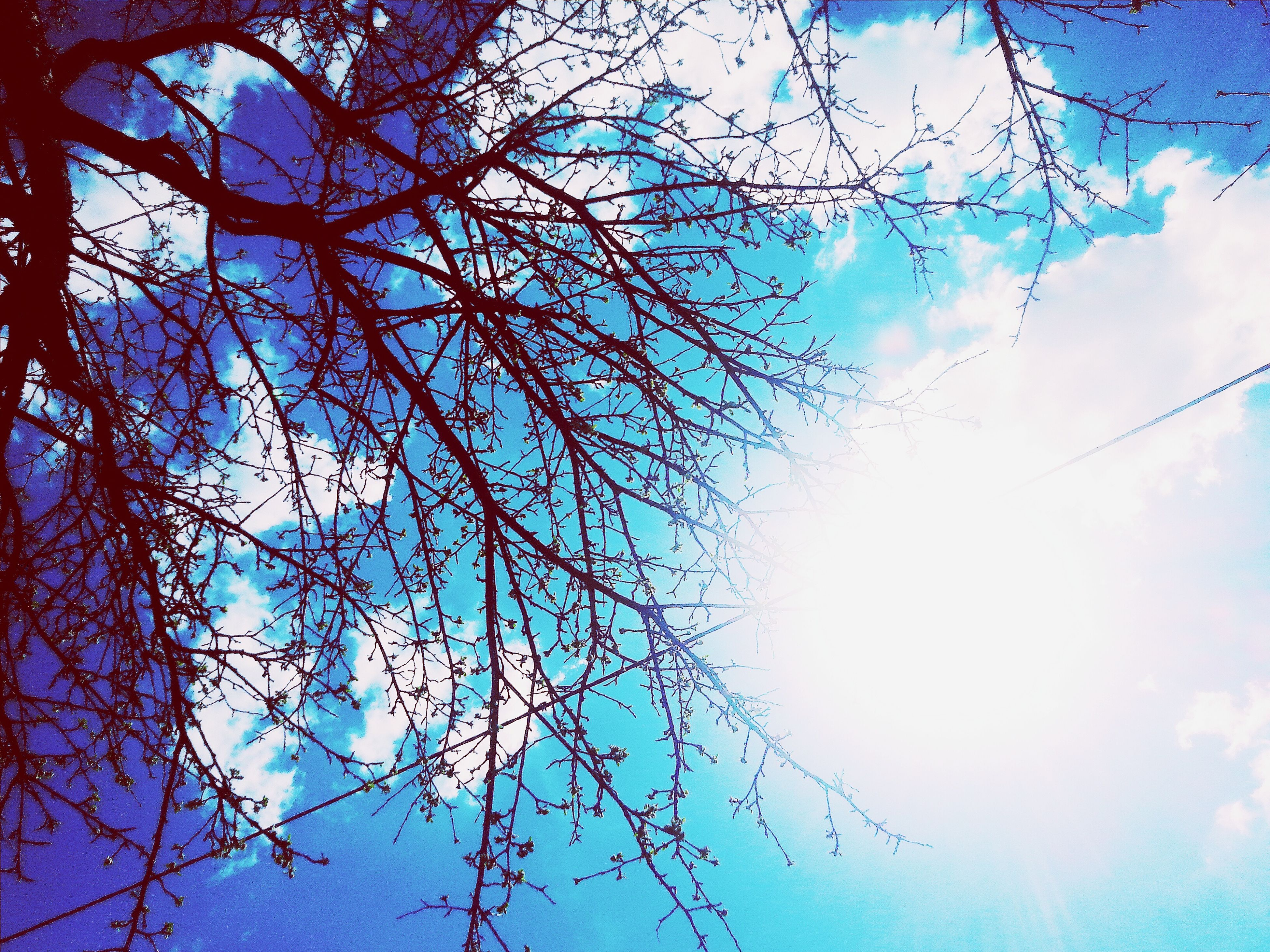 low angle view, branch, sky, tree, bare tree, blue, nature, cloud - sky, beauty in nature, growth, silhouette, cloud, tranquility, outdoors, no people, day, high section, scenics, backgrounds, sunlight