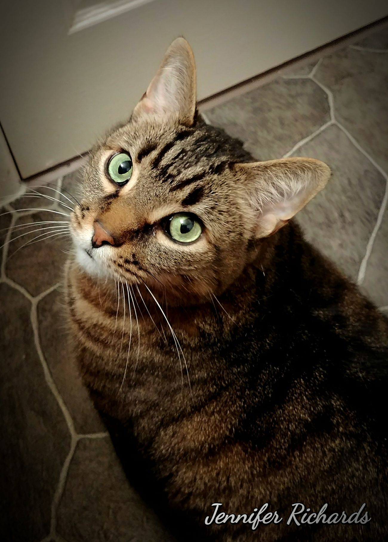 My handsome Boomer..He likes to sit in the bathroom with me 😊 One Animal Domestic Cat Pets Domestic Animals Indoors  Mammal Close-up Hanging Out EyeEm Taking Photos Eyeemphoto The Week On Eyem Hello World Not Strange To Me Eye Em Around The World Check This Out Cat♡ Cats Cats Of EyeEm