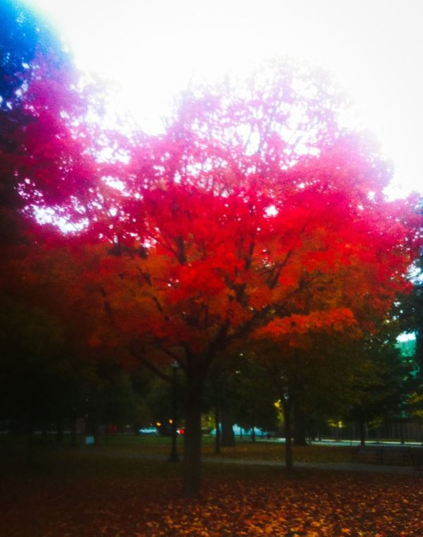 Near Simmons College last spring Taking Photos Hello World Check This Out