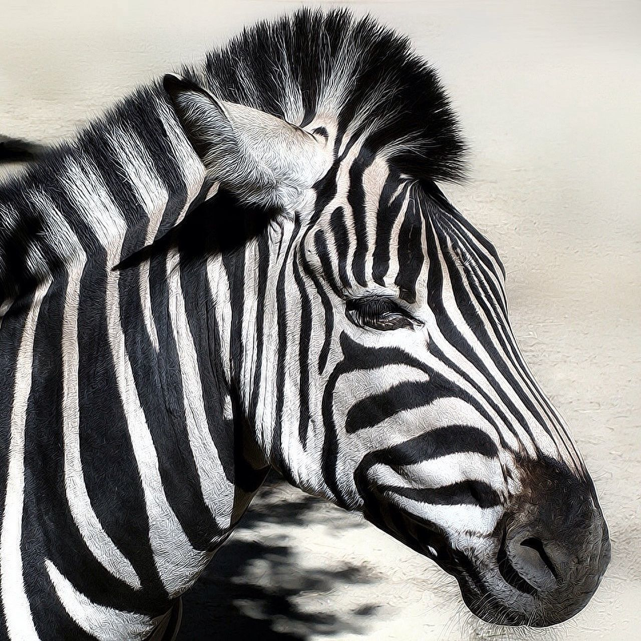 Beautiful stock photos of zebra, Animal Head, Animal Themes, Clear Sky, Close-Up