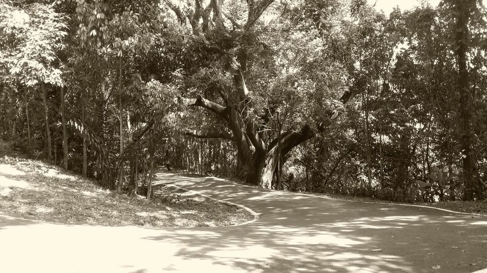 Camino viejo Old Way Old Path Sepia Panamá Ancon Hill Cerro Ancón