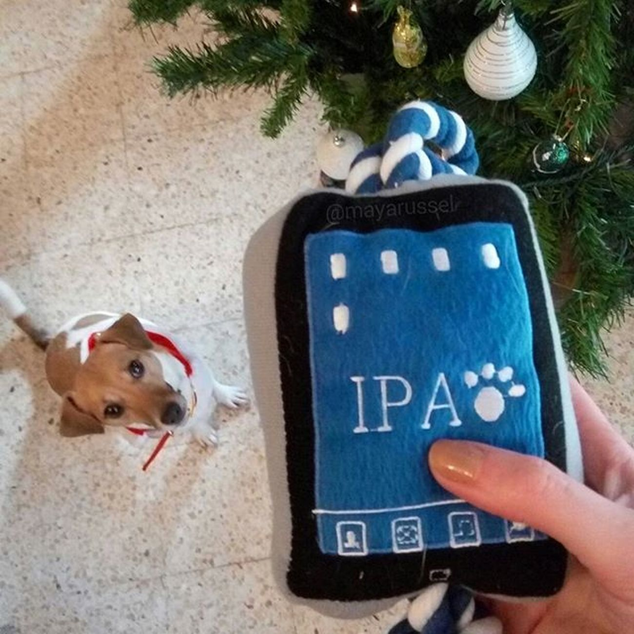 J'ai eu un iPad pour Noël ! Youhou ! Apple Ipad Jackrussellinstagram Instadog Dogstagram Ilovemydog Ilovemyjackrussell Animalsofinstagram Animallover Dogselfie Ilovemyjackrussell Lovedogs Jackrussell Jackrussellterrier Cutedogs DogAndChild Instadogs Jackstagram Mydogiscutest Dogs_of_instagram Ilovemyjrt Parsonrussell Instapet Instaanimal Jackrussellsofig dogoftheday doglovers pictureoftheday Christmas