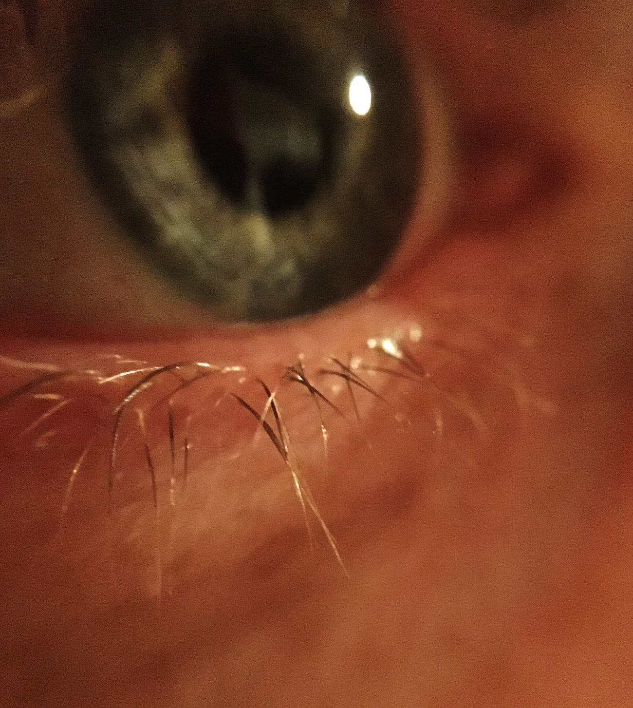 Maximum Closeness Eye Blue Eyes Eyelash Eyelashes Close-up Small Detail Human Skin Human Body Part Eyesight Skin One Person Indoors  Human Face Human Eye