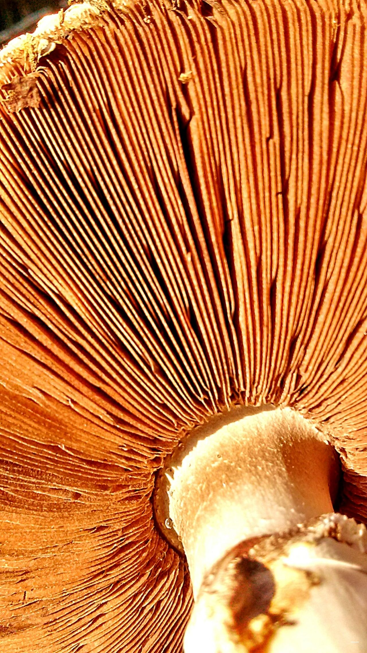 Your Design Story Fungus Fungi Seta Gourmet Foodporn Nature Detail Brown Relaxing Simplicity Natureporn Naturaleza Design Art Mico Hongo Descomposer Life Nature_collection Mushroom Dew Drops Champiñon Champignon Casual