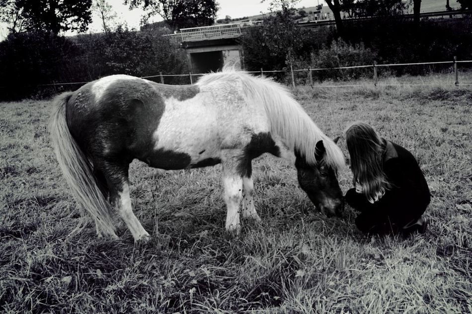 Horse LoveMyPony Throwback Meadow