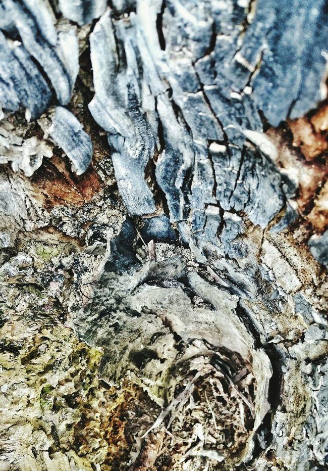 Holz Kunst Enjoying Life Textureporn Texturestyles Textured  Textures Textures And Surfaces Holzstamm Check This Out Taking Photos Holztextur Holz Woodstock WoodArt Wooden Texture Wood Art Wood - Material Wood