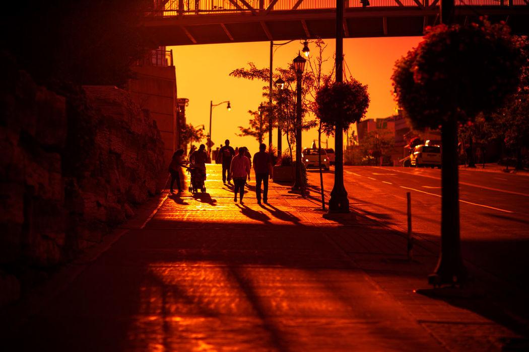 Sunlight Sunset Tree Shadow Illuminated City No People Outdoors Nature Architecture