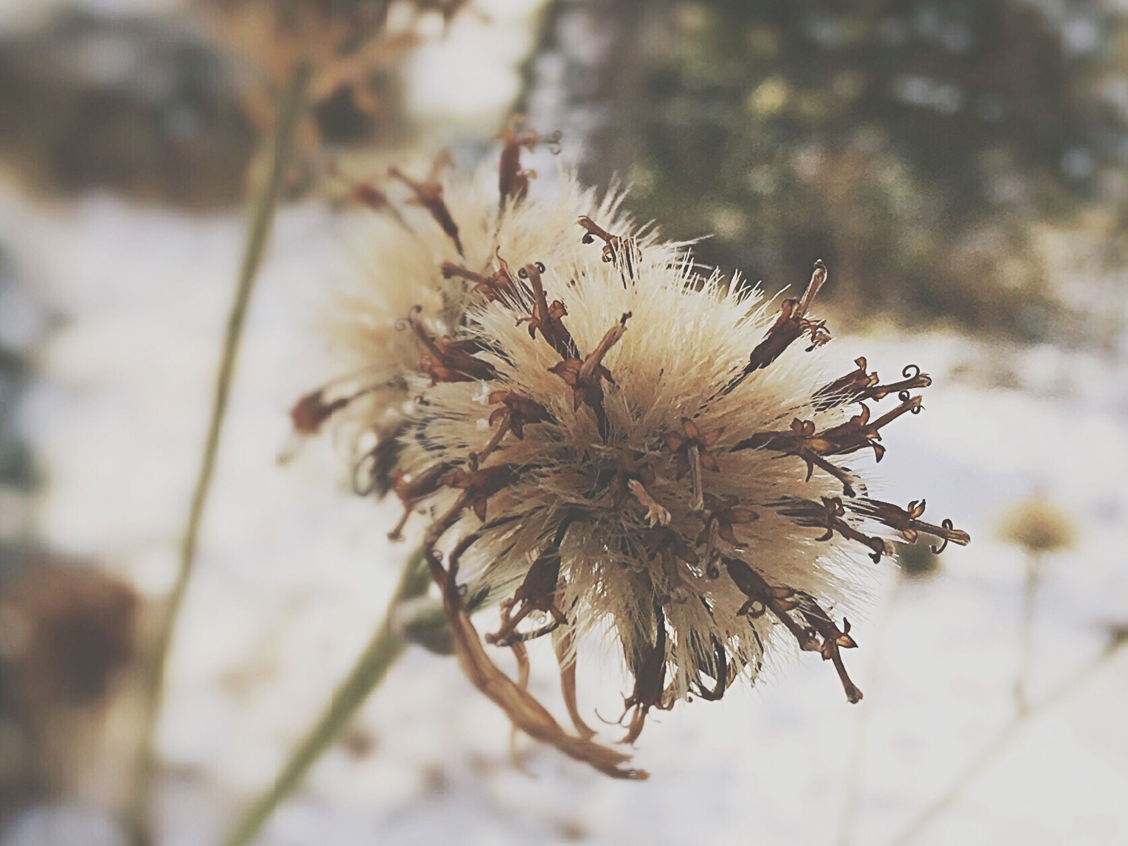 nature, growth, close-up, flower, outdoors, plant, fragility, no people, beauty in nature, branch, day, tranquility, flower head