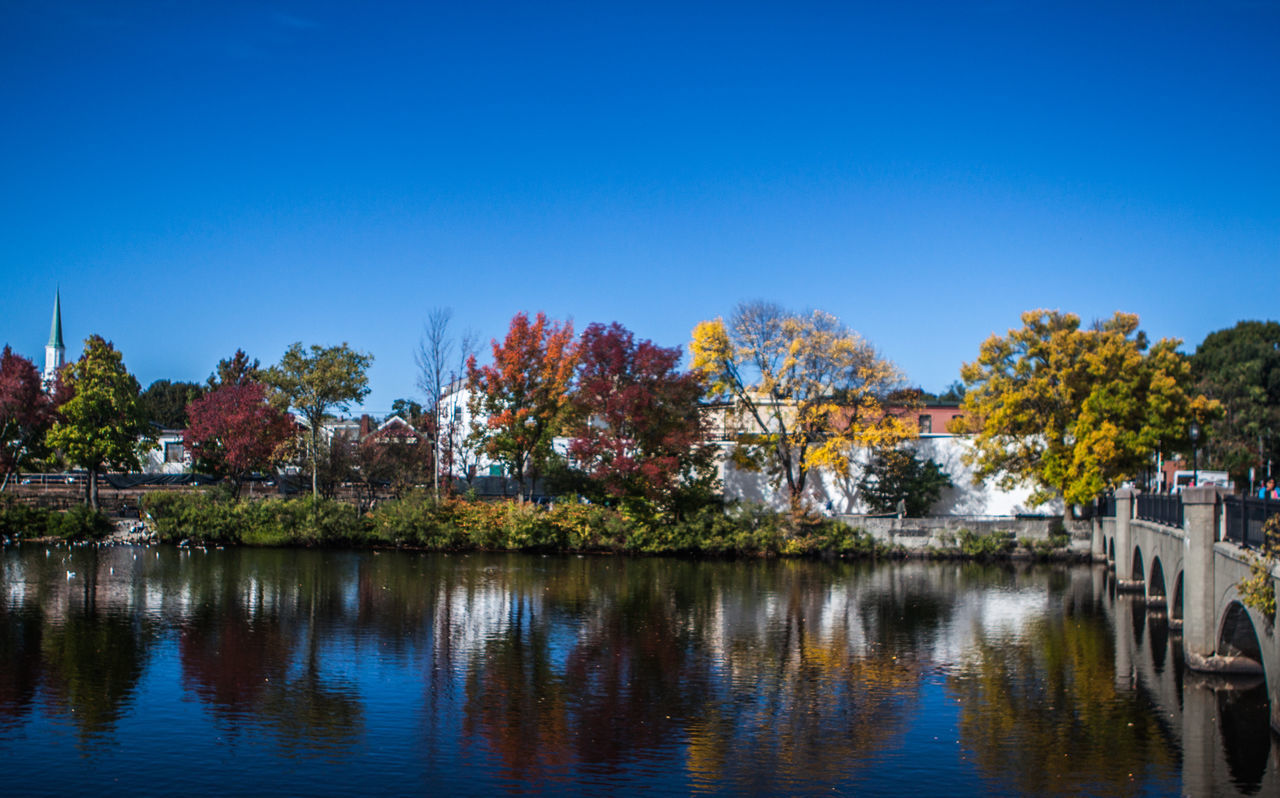 Waltham, MA fall season Autumn Beauty In Nature Blue Boston Day Fall Growth Massachusetts Nature Nature No People Outdoors Scenics Sky The 2016 EyeEm Awards Tranquility Tree Waltham