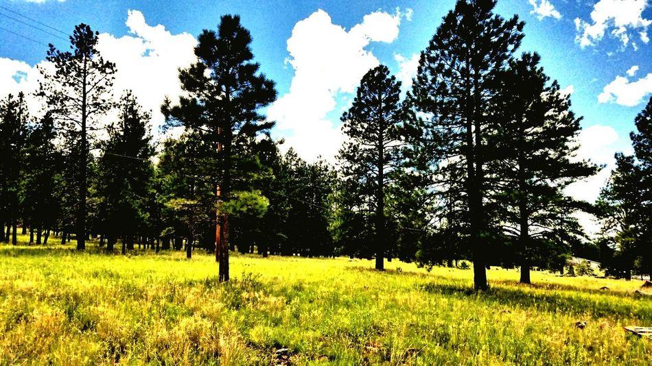 Sedona. Arizona. Sedona. Arizona. Trees. Roots. Growth. LIFE. Sedona, Az Beautiful. Outdoors Tranquil Scene Sky Nature Beauty In Nature Beautiful Pattern, Texture, Shape And Form Calm Green Color Myphotography. No People Scenic. Adventure Mywork Arizona Nature Photography Photooftheday