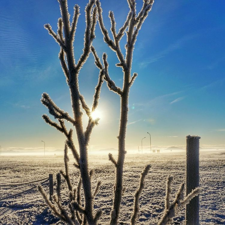 Cold And Frosty Morning Mist Morningwalk Sky And Clouds Frosted Tree Blue Sky And Clouds Misty Morning Blue Sky Winter_collection Sony A5000 Frosted Beauty In Nature