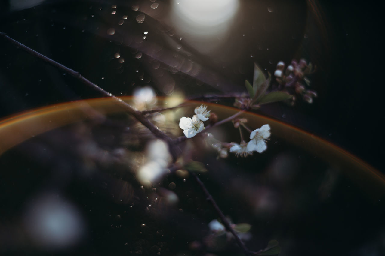 Beauty In Nature Blossom Cherry Blossoms Close-up Day Eye4photography  EyeEm Best Shots EyeEm Nature Lover Flower Flower Head Fragility Freshness Growth Nature Nature_collection Naturelovers No People Outdoors Water