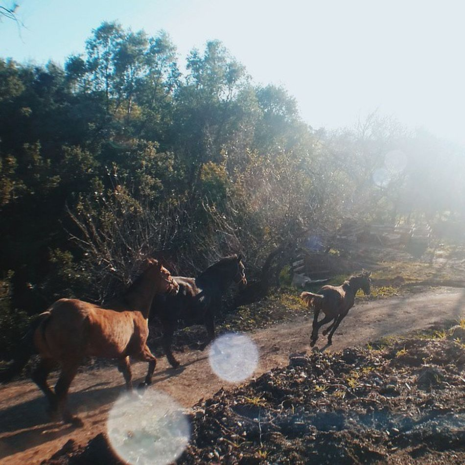 We built our own world Horses Freedom RunInTheSun Igers Ranchlife Neewer 52mm BeastgripPro Vscocam Wild Animals Horse Run Nature Natureporn Life Moment Mobilephotography Naturegram Horsepower Animalgram Lead Pack Follow