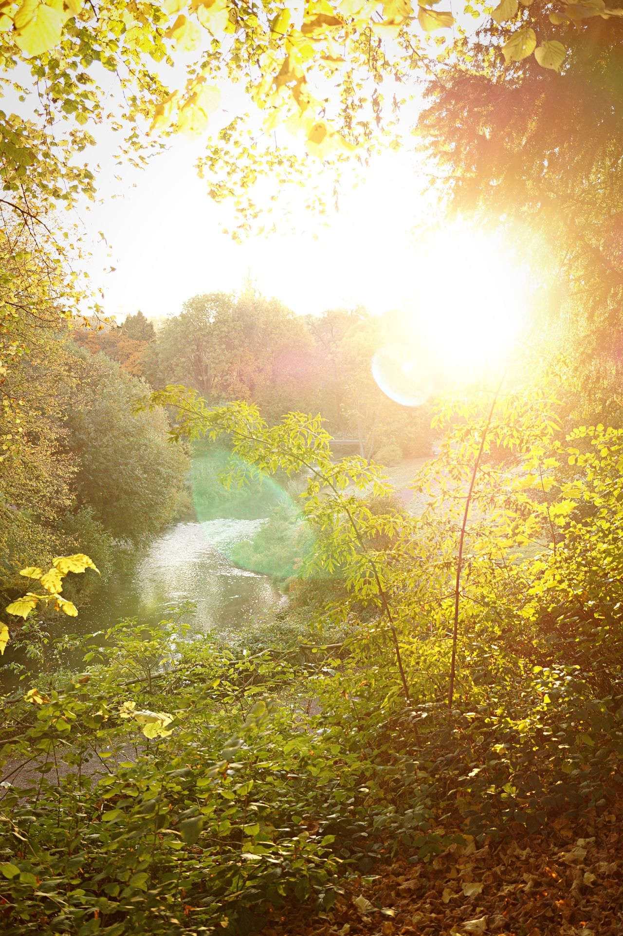 Ilmpark Weimar Sunrise Park Fall Beauty Autumn Beauty In Nature Nature Atmosphere Tranquility Light Day Sun Sunlight Sunny Outdoors Bushes Lens Flare The Great Outdoors With Adobe 43 Golden Moments Color Palette The Great Outdoors - 2017 EyeEm Awards