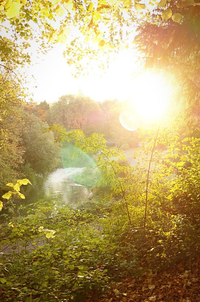 Ilmpark Weimar Sunrise Park Fall Beauty Autumn Beauty In Nature Nature Atmosphere Tranquility Light Day Sun Sunlight Sunny Outdoors Bushes Lens Flare The Great Outdoors With Adobe 43 Golden Moments Color Palette
