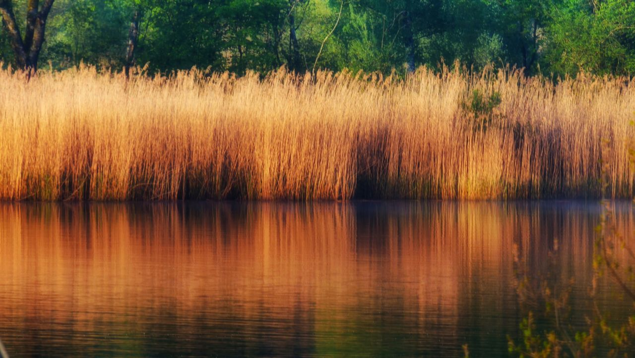 The Great Outdoors - 2017 EyeEm Awards Reed - Grass Family Reeds Tree Nature Reflection Outdoors Beauty In Nature Tranquility Lake Tranquil Scene Scenics Growth No People Water Day Grass Sky