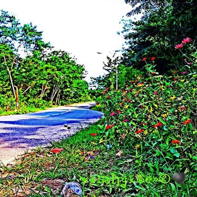 learn made HDR pict