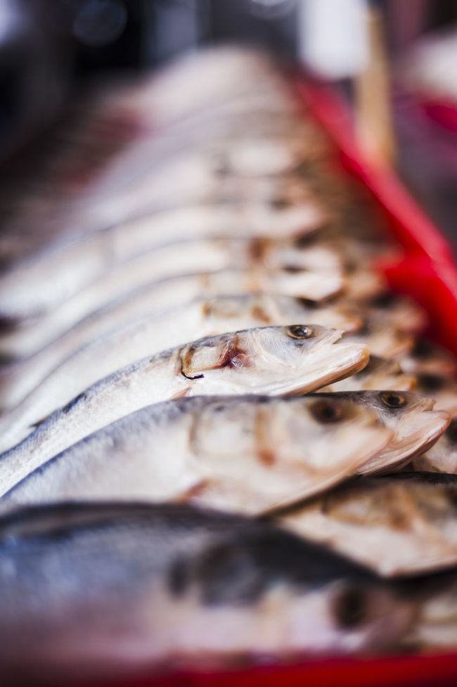 Animals Close-up Dead Fısh Detail Fish Market Marine Life Repetition Retail  Salted Fish Still Life Water Creatures Wet Market