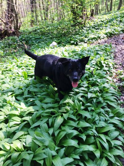 ❤️ Black Color One Animal Pets Outdoors Leaf Dog Nature Plant