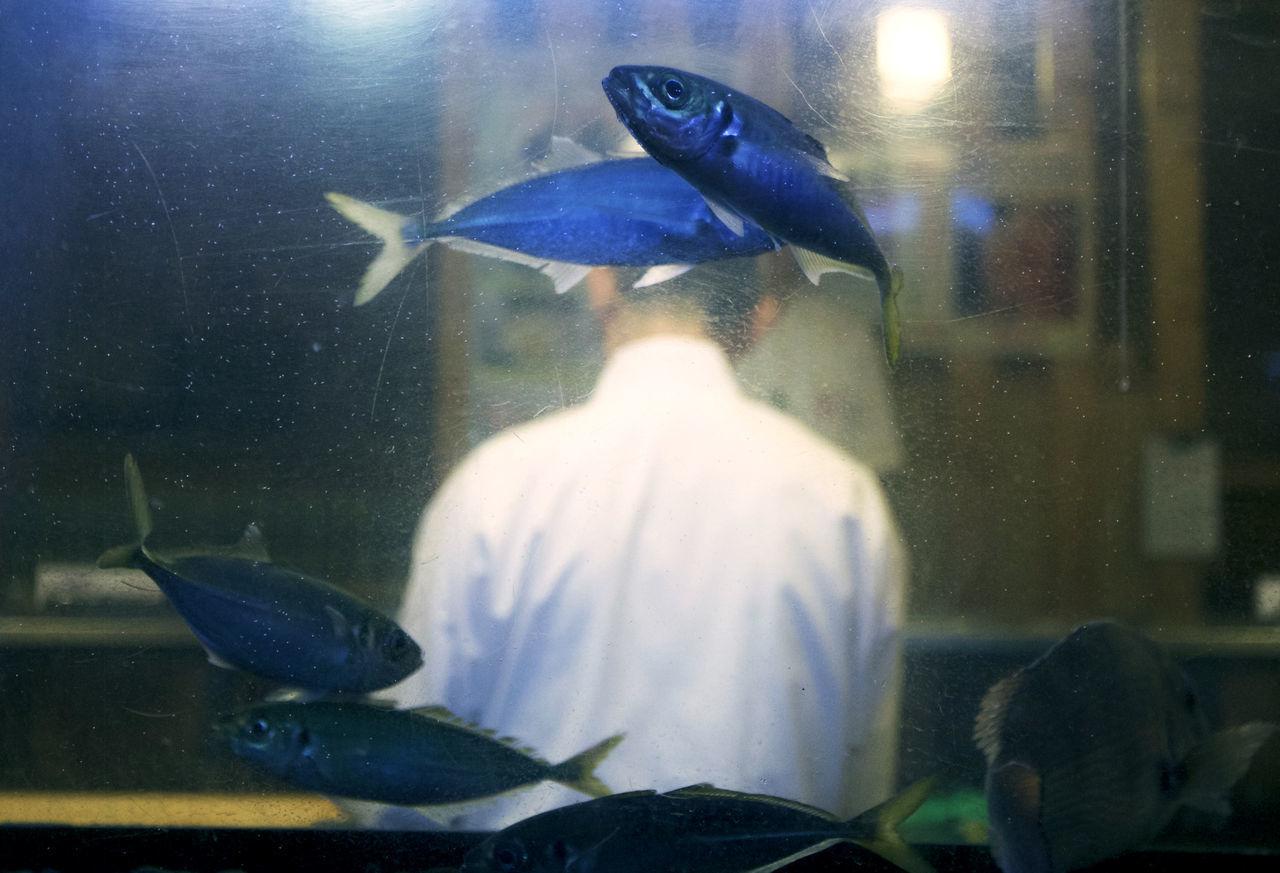 Cooking Sushi Swimming Animals in the Wild aquarium chef day fish fish tank fishing Nature sea life swim Swimming under the sea water The Week on EyeEm Editor's Picks