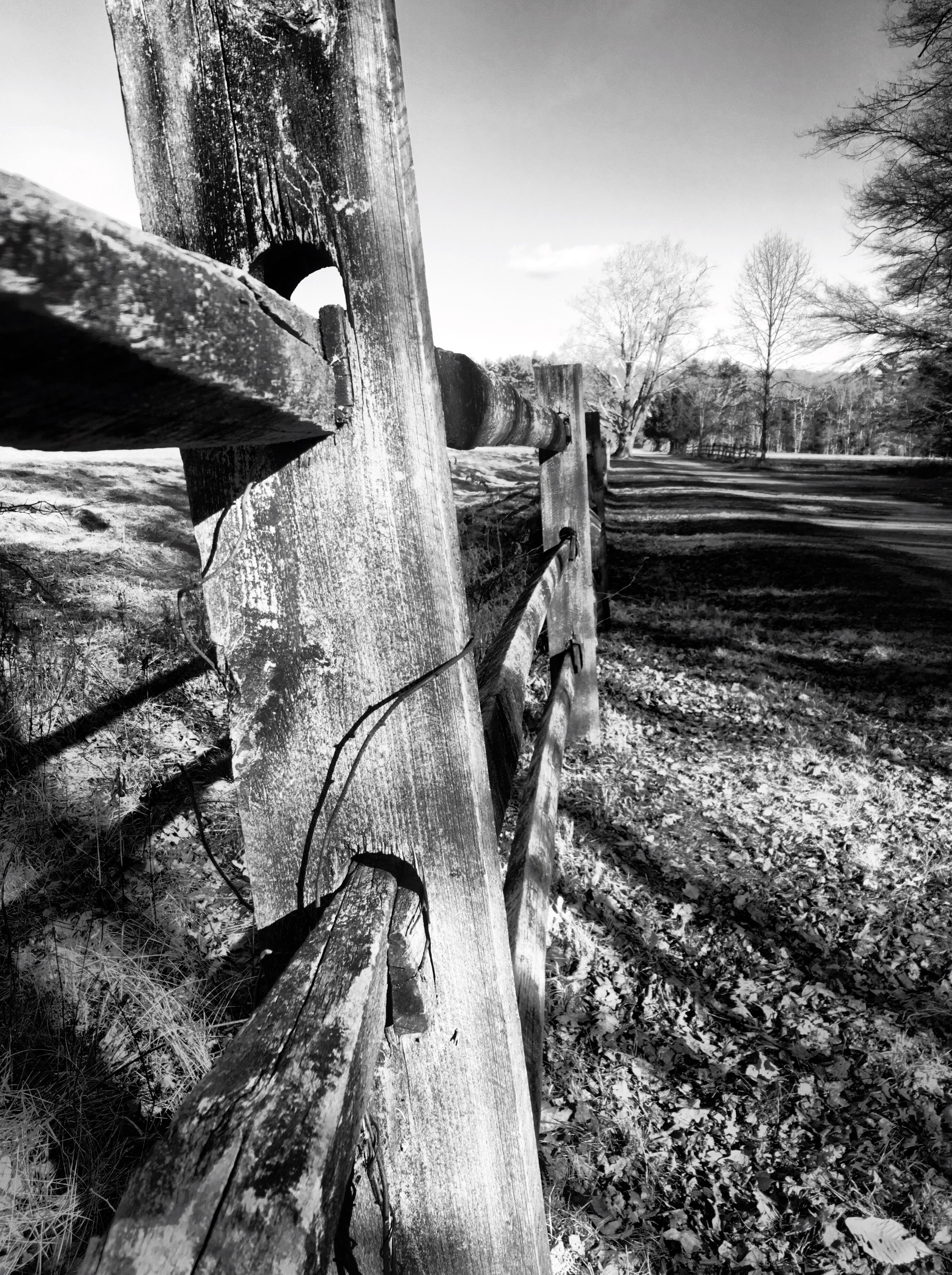 wood - material, tree, field, wooden, sky, fence, wood, grass, landscape, tree trunk, sunlight, log, tranquility, day, rural scene, nature, outdoors, growth, old, no people
