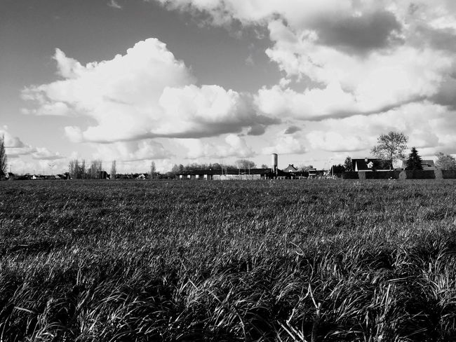 Belgium Gent Oostakker Clouds And Sky Grass Nature