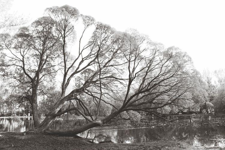 Tree Monochrome