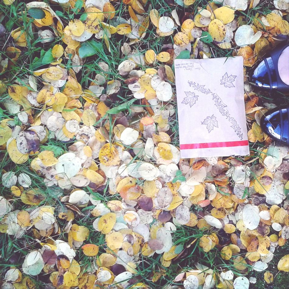 Autumn mail from The Netherlands. Postcrossing Autumn Leaves Penpals