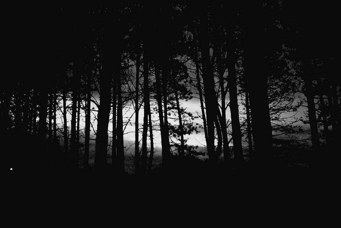 Woods at night. Woods Forest Night Trees Blackandwhite Black And White Black & White Nightime