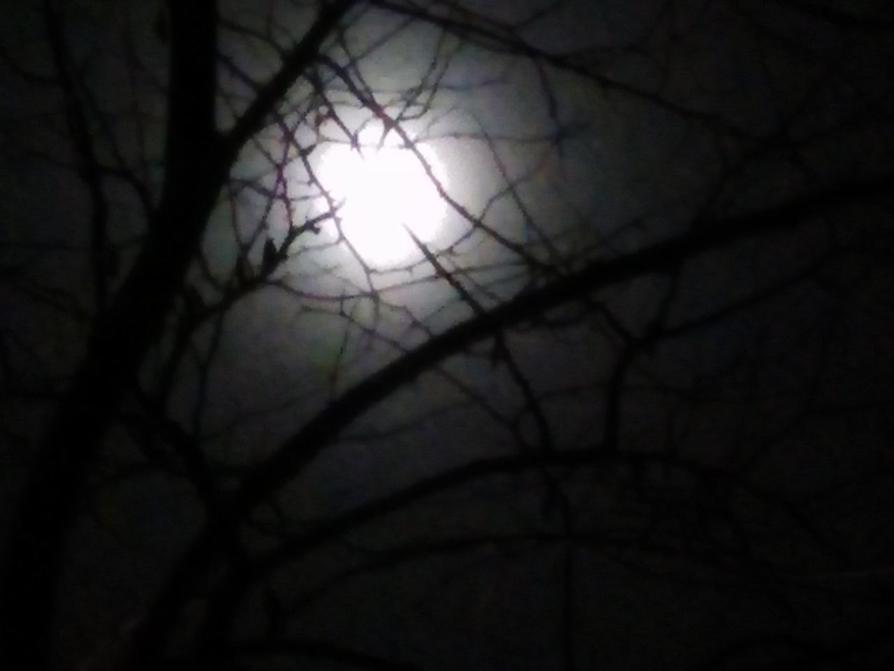 branch, night, bare tree, beauty in nature, outdoors, nature, no people, silhouette, tree, close-up, sky, astronomy