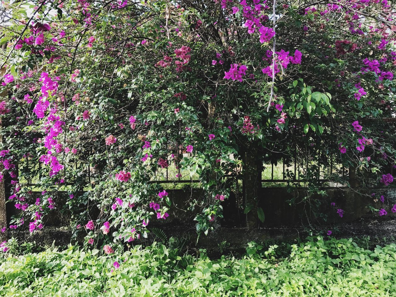 Flower Growth Nature Beauty In Nature Purple Fragility Plant Freshness No People Blooming Outdoors Day My Garden