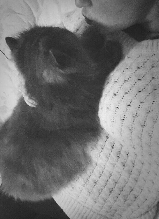 Titan ♥ Animal Love Cat♡ Now!!! Hug Me