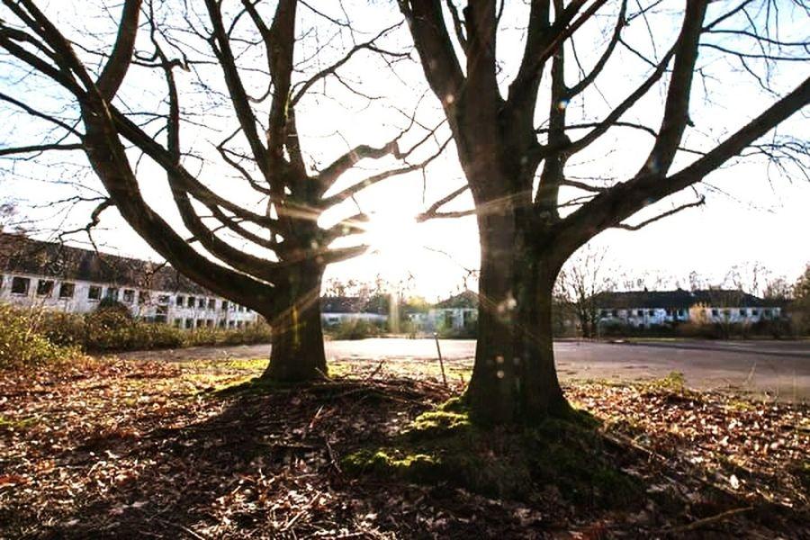 Nature Strikes Back Tree_collection  Blendenstern