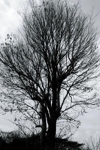 arid ... Nature_collection Hugging Tree TreePorn Fortheloveofblackandwhite Bwphotography EyeEm Indonesia