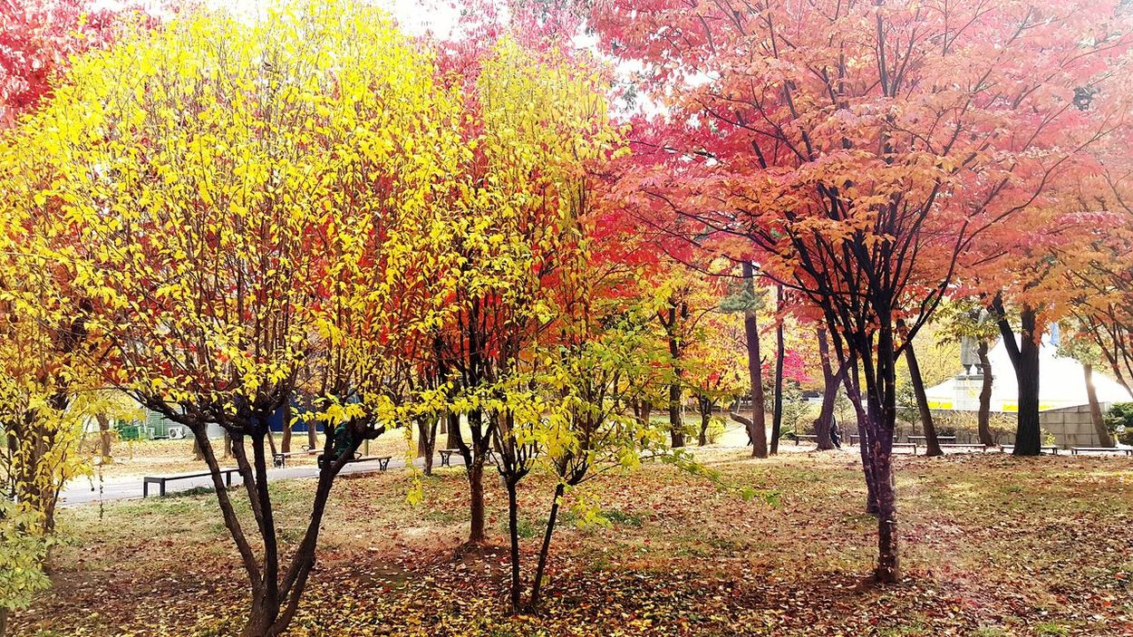 Love Atumn Atumn Is Here ... Fall Mood! Atumn Leaves Atumn Atumn Colors The Places I've Been Today Enjoying Life Seoul Hanging Out