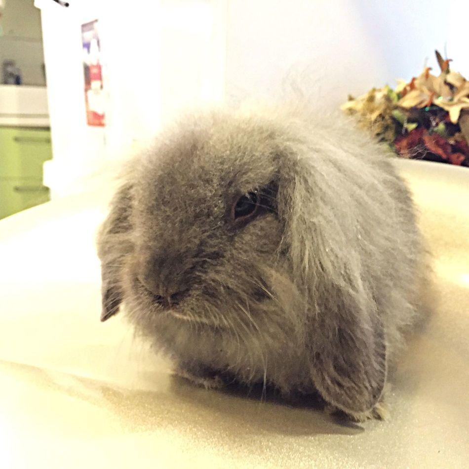 (˶‾᷄ ⁻̫ ‾᷅˵) Mr Rabbit